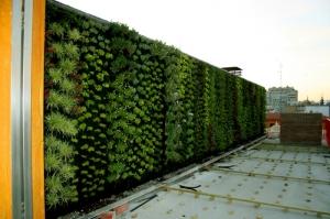 fachada-vegetal-murcia-jardin-vertical-recien-plantado-cobertura-vegetal-atico